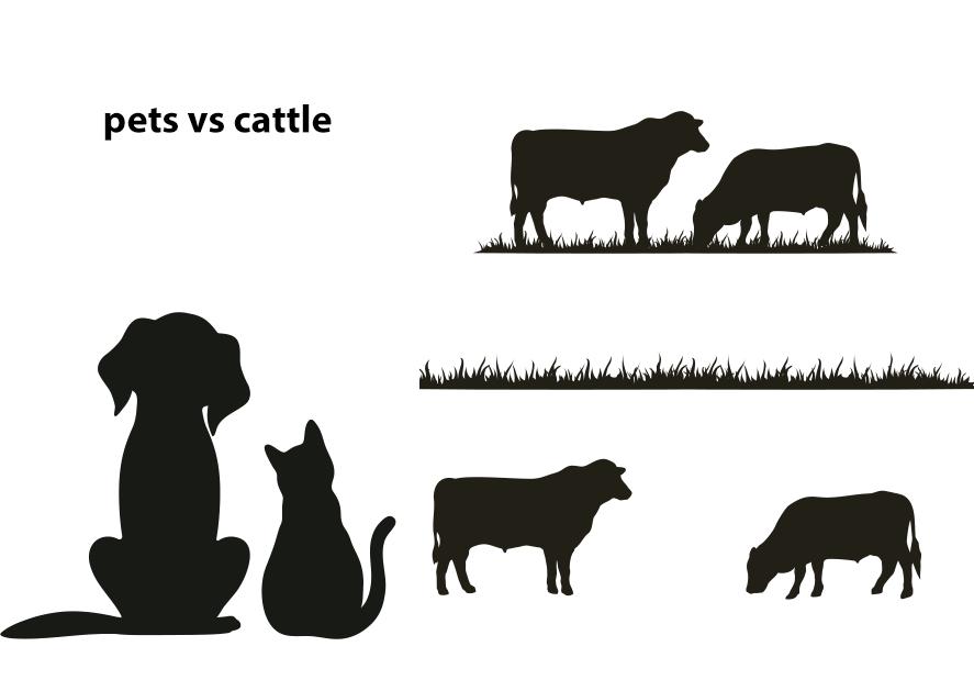 Pets vs cattles